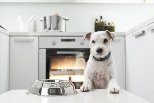 cane-cibo