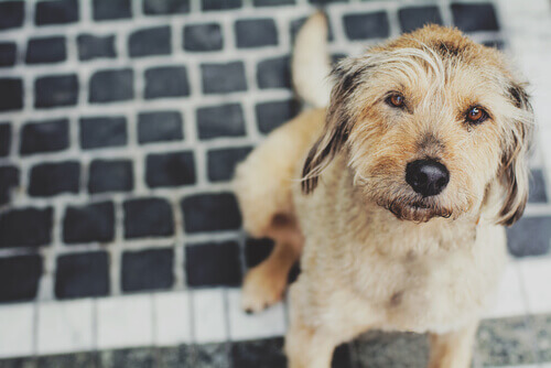 Come prevenire l'influenza del cane