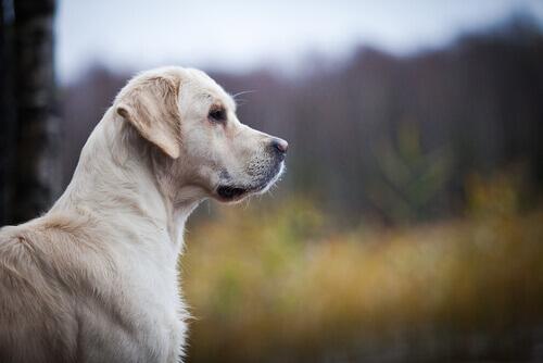 Come riconoscere i problemi cardiaci nel cane