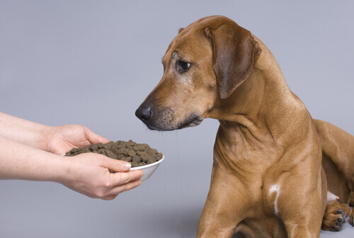 cane-e-ciotola-di-cibo