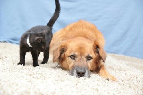 cane-e-gatto-sul-tappeto
