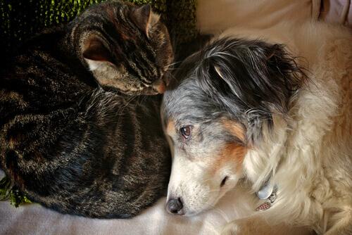 scottature cani e gatti