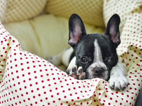 Cosa fare quando il cane fa la pipì sul letto