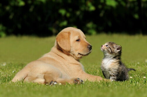 cane o gatto sbagliato
