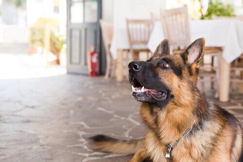 Cosa fare se non potete portare il cane in vacanza?
