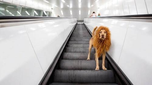cane leone su scale mobili
