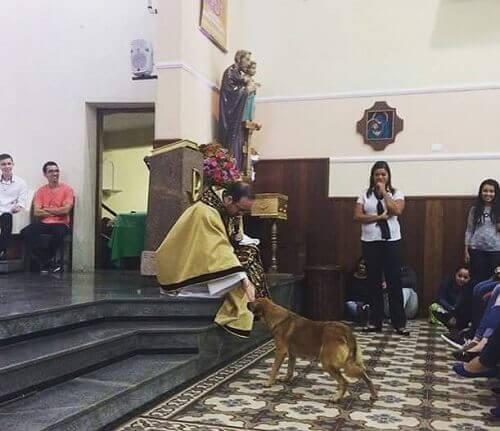 cane randagio riceve benedizione in chiesa