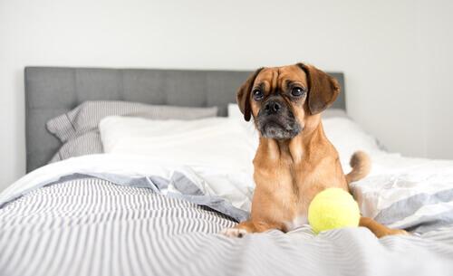 cane-sul-letto