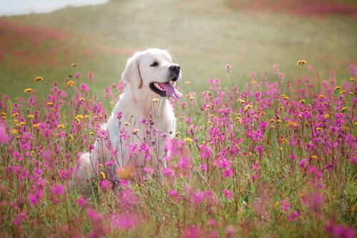 cane-tra-i-fiori