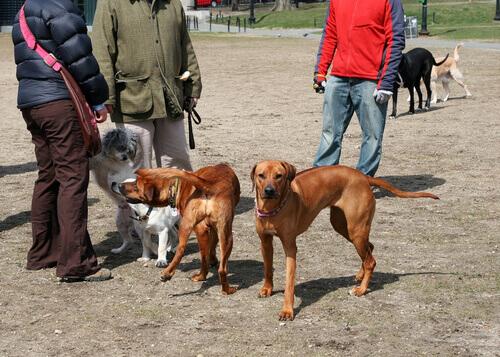 cani-che-rischiano-di-mangiare-salsiccia-con-spilli
