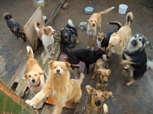 Come aiutare i rifugi per cani e gatti
