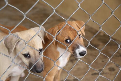 cuccioli-in-un-rifugio