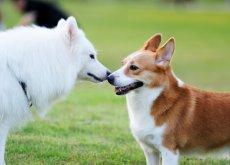 due cani fanno amicizia
