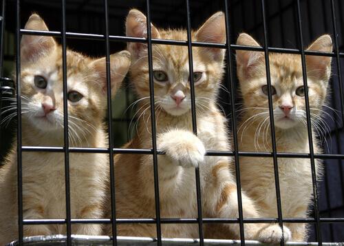 gatti-rossi-dentro-il-trasportino