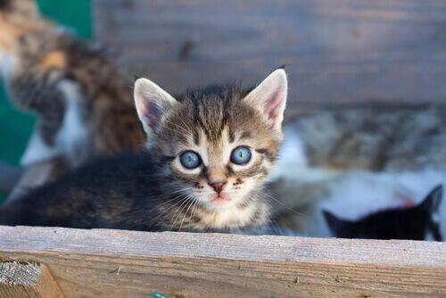 9 motivi per adottare un gatto