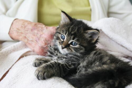 gatto-persona-anziana