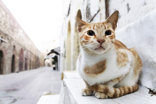 gatto-seduto-sugli-scalini