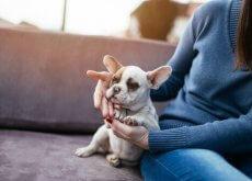 i cani migliorano la salute dei padroni