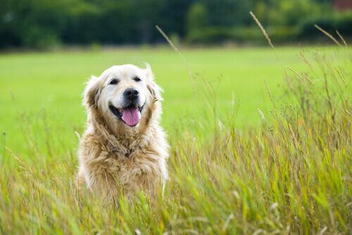 Lettera ad un cane adottato che sta in cielo