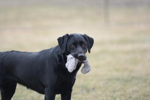 7 oggetti non adatti agli animali domestici