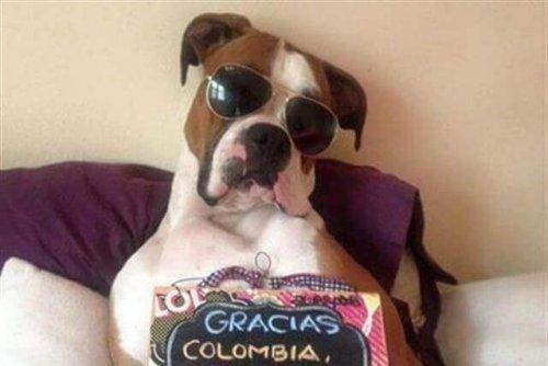 Oscar: il cane che ha rivoluzionato il web