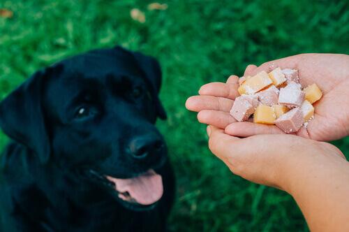 persona-da-da-mangiare-al-cane
