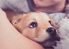 respirazione assistita cuccioli