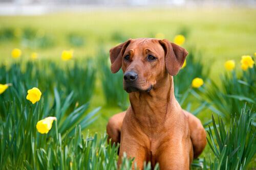 Rimedi fatti in casa per cani