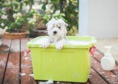 scegliere-lo-shampoo-piu-adatto-al-vostro-cane