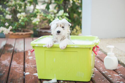 Come scegliere lo shampoo più adatto per il vostro cane