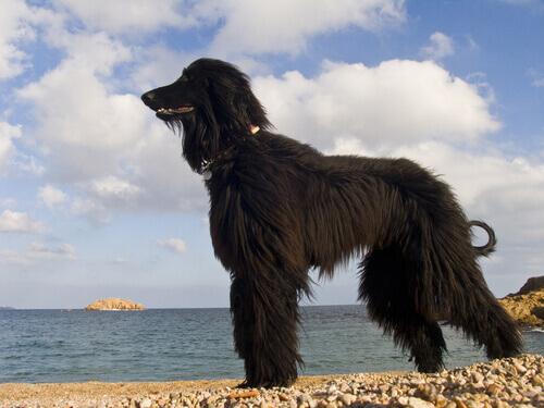 spiaggia-per-cani-a-barcellona