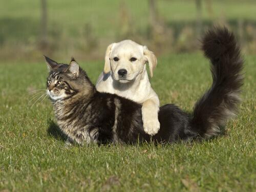 cane e gatto sul prato