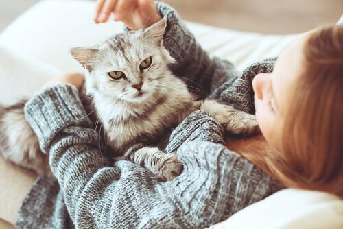 ragazza sdraiata a letto con gatto sul ventre
