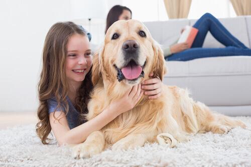 Come riescono i cani a tornare a casa?