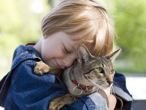 5 lezioni che i bambini possono imparare dai gatti