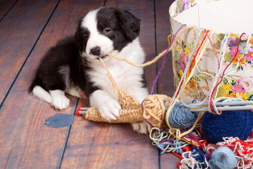 I 7 incidenti domestici più rischiosi per i cani