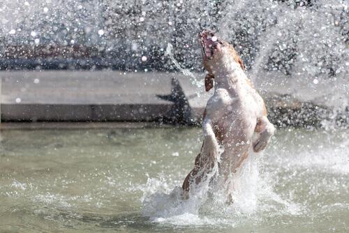 cane-che-salta-in-una-fontana