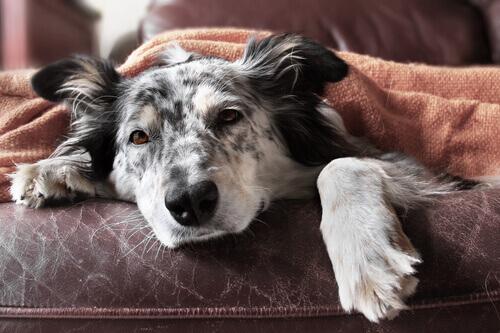 10 suggerimenti per combattere la diarrea nei cani