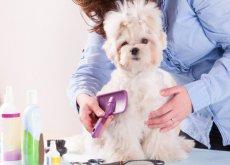 pettinare cane contro perdita di pelo