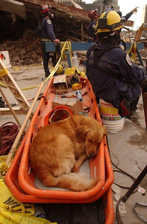 cane-da-salvataggio-a-riposo