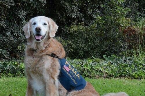Addio all'ultimo cane da salvataggio dell'11 settembre