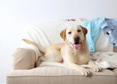 cane-sdraiato-sul-divano