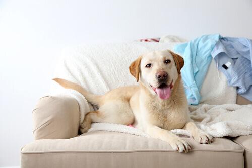 È giusto far salire il cane sul divano?