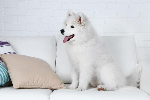 cane-seduto-sul-divano