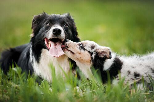 Guida per aiutare il vostro cane a socializzare