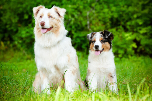 L'Alzheimer nei cani: quali sono i sintomi?