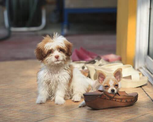 Cosa fare se il cane morde e rompe gli oggetti in casa?