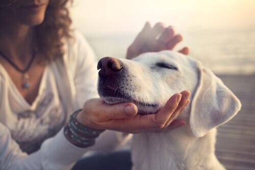 coccolare-il-cane