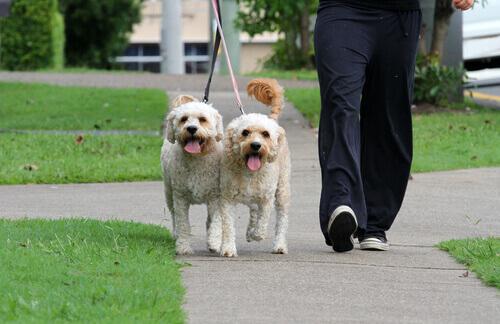 cuccioli-di-cani-a-passeggio