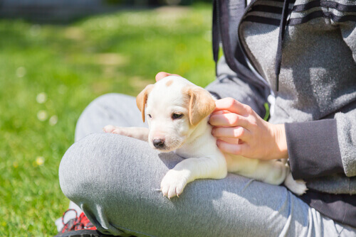 donna-con-cucciolo-in-braccio